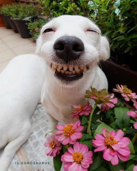 Пес с необычной улыбкой покорил пользователей Инстаграма