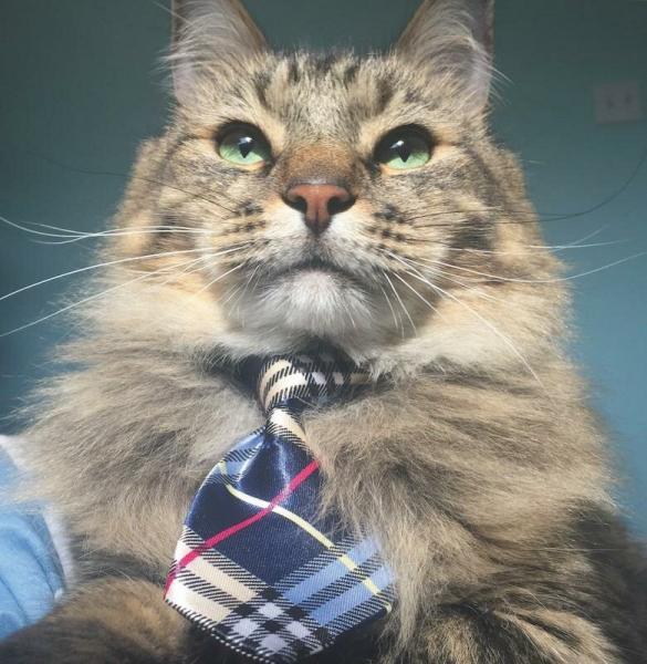 Как сделать классную фотку вашей кошки для Instagram?