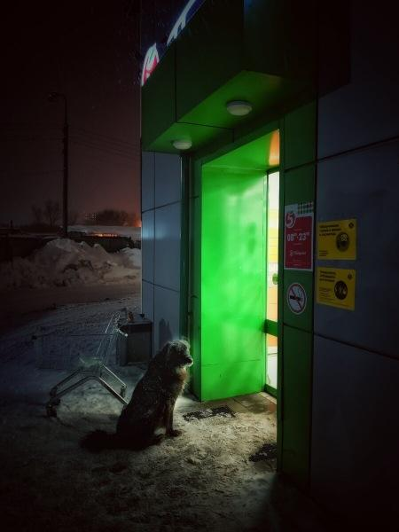 Февраль, бездомный пёс и очередная неделя холодного февраля в фотографиях моего мобильного телефона