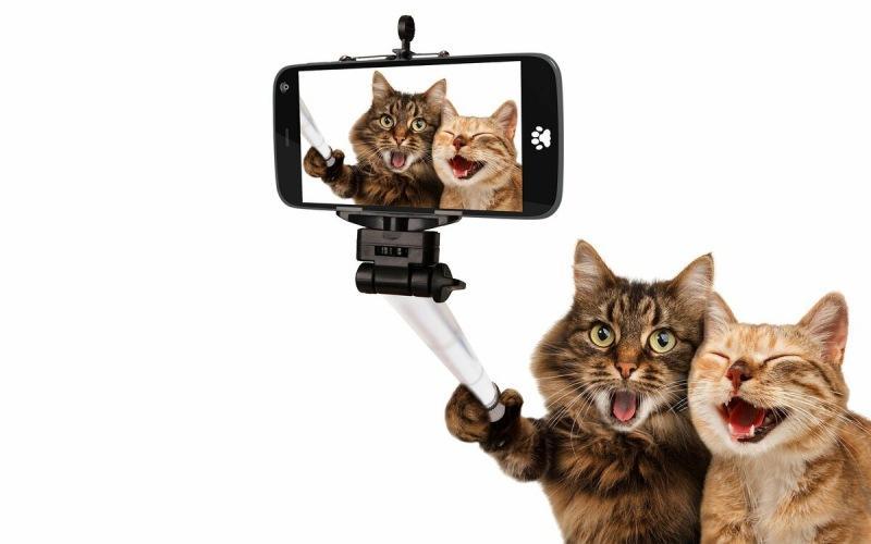 Как вести идеальный Instagram-аккаунт кота и зарабатывать на нём.