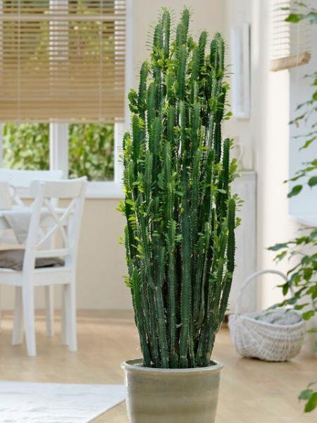 Самые модные растения инстаграма