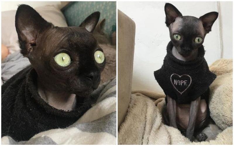 10 кошек и собак с необычной внешностью, покоривших Инстаграм